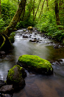 Forest Water Trail - Cape Perpetua, OR